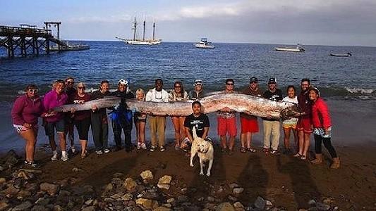 velka ryba