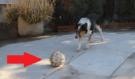 Tenhle pes je nazývan jako NEJchytřejší na světě, NEPROPÁSNĚTE KONEC!