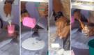 Foodporn: Opravdové umění! Tenhle zmrzlinář z Thajska vyrobí během 2 minut originální zmrzlinu